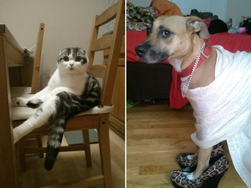 Домашние животные, которых всё устраивает (19 фото)
