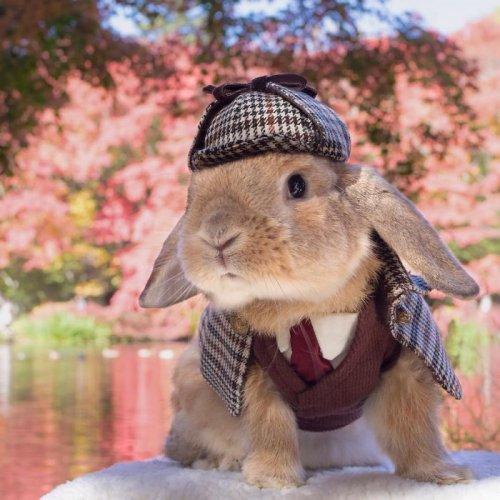 Самый стильный кролик Пэй-Пэй покоряет Instagram (16 фото)