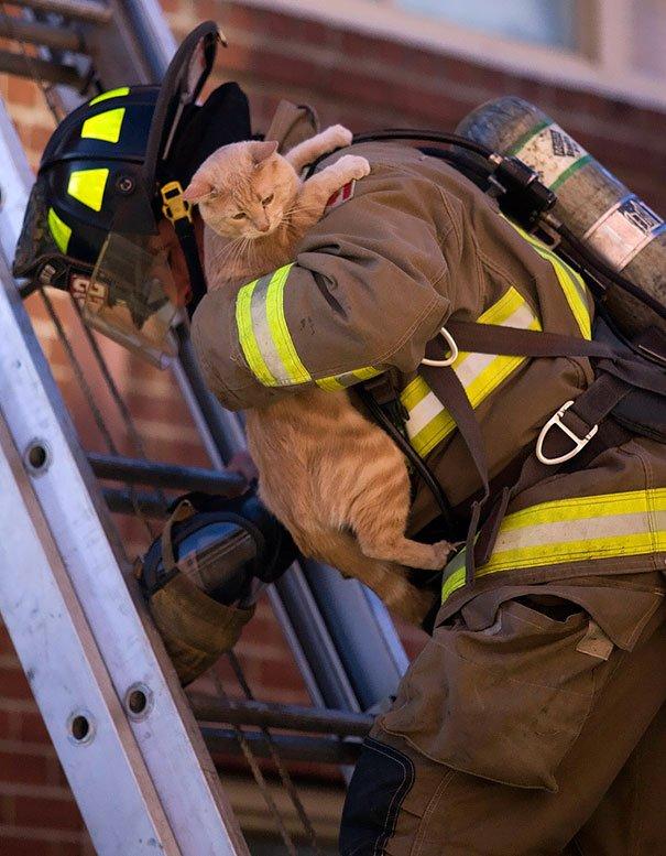 фото пожарный спас человека фото