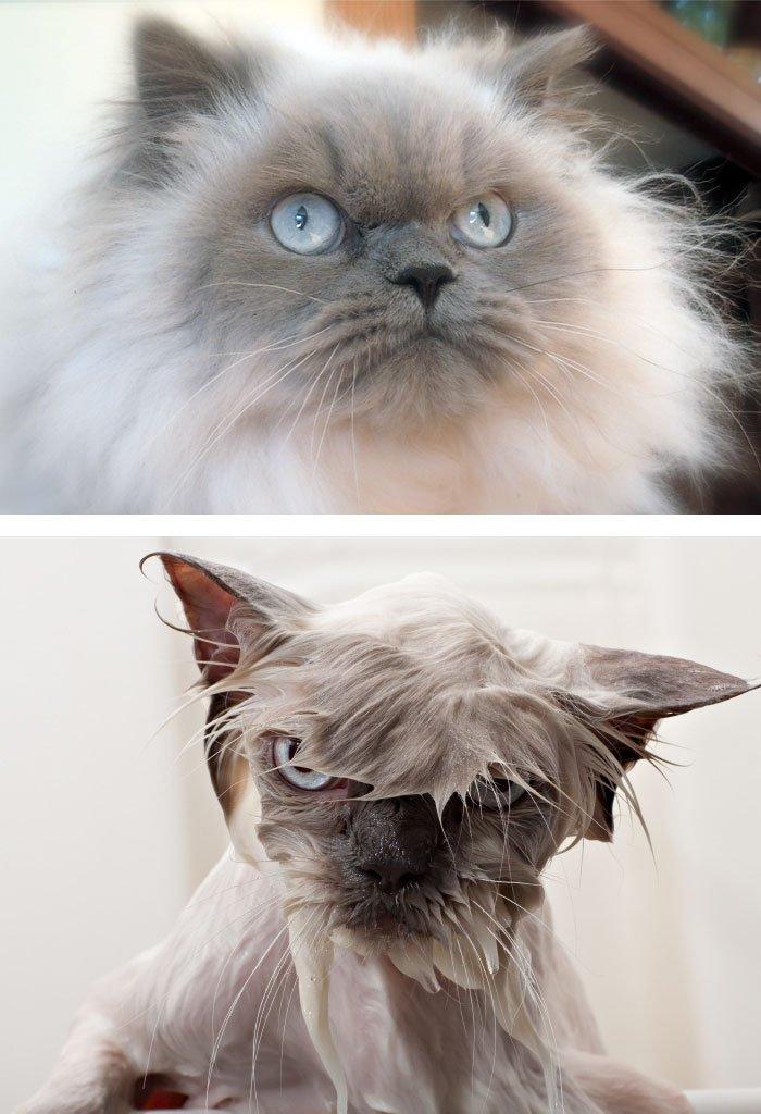 абгарян до и после смешные фото иметь возможность