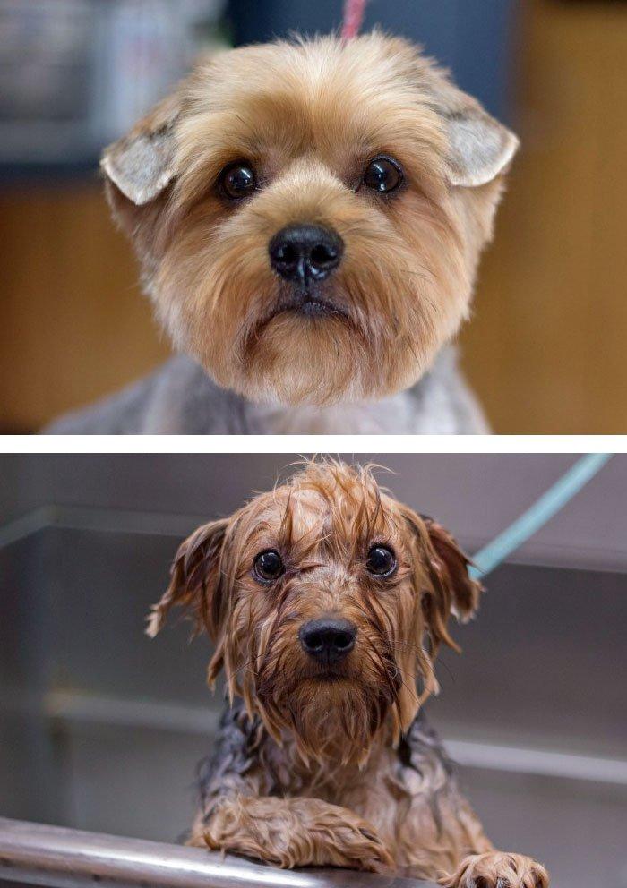 до и после смешные фото поделиться для тех