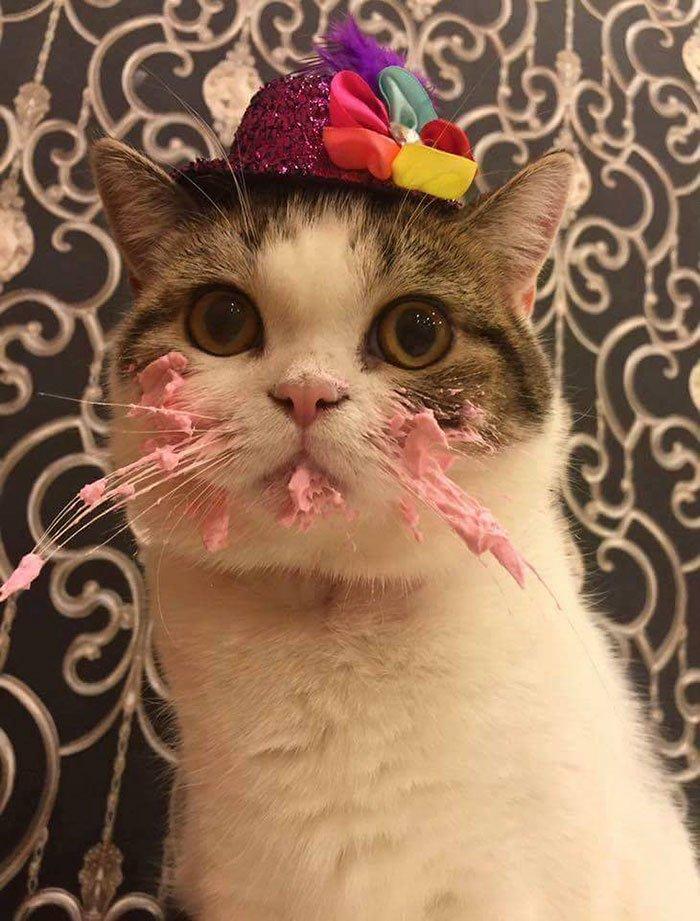 Котик на торте картинки