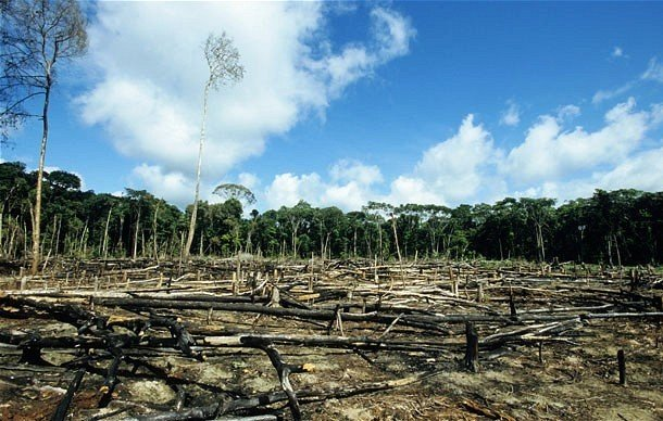 destruction of natural resources essay Natural resources and energy in the rainforests the beauty, majesty, and timelessness of a primary rainforest is indescribable rainforest destruction essay.