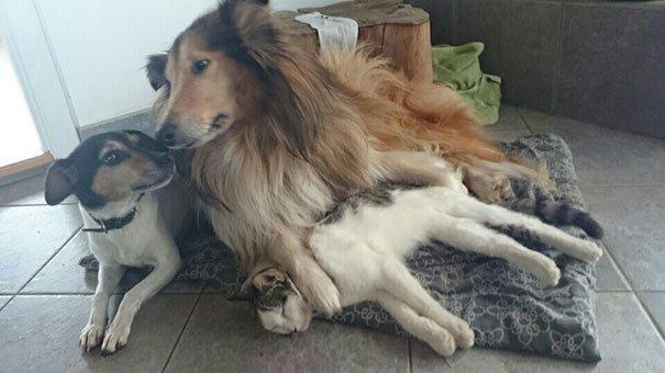 кошка с собакой спят вместе с первого дня знакомства 9 фото