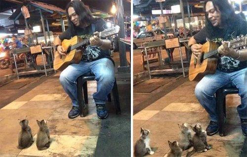 Четыре котёнка пришли послушать уличного музыканта