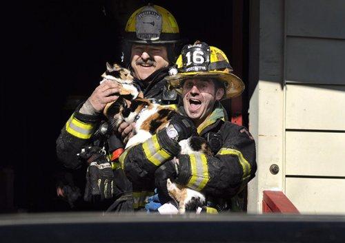 Пожарные, спасшие домашних животных (38 фото)