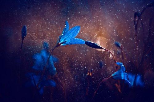 Сказочный мир в макрофотографиях Магды Васичек (15 фото)
