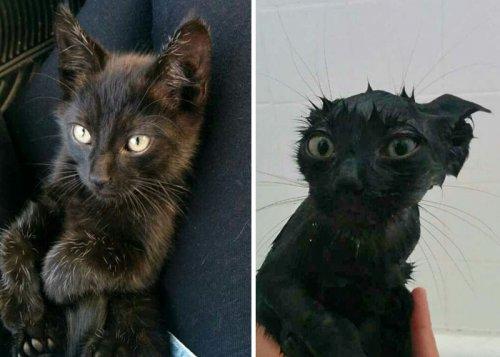 Смешные животные до и после купания (29 фото)