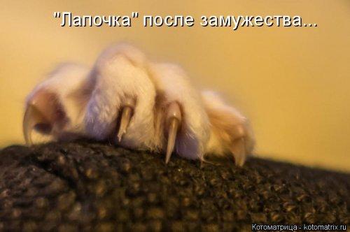 Свежая котоматрица для настроения (35 фото)