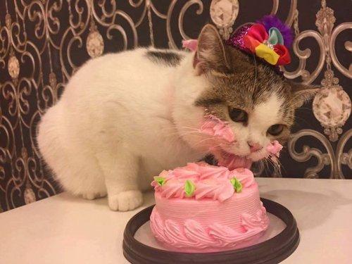 Очаровательный котик ест тортик (4 фото)