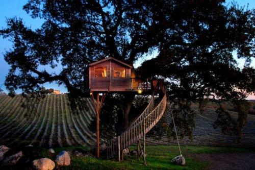 Домик на дереве, окружённый лавандовым полем (12 фото)