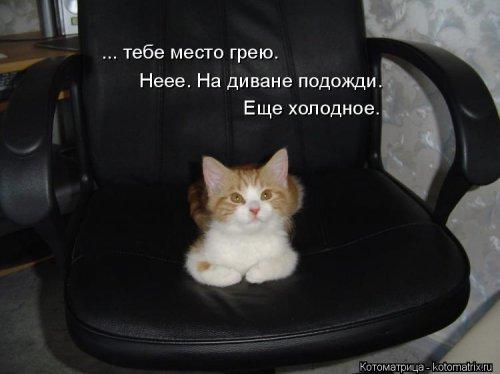 Свежая котоматрица (20 фото)