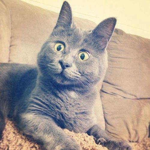 Кот Кевин, который всегда удивлён (14 фото)