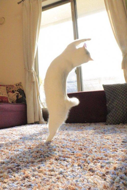 Кот Мирко, который очень любит танцевать (8 фото)