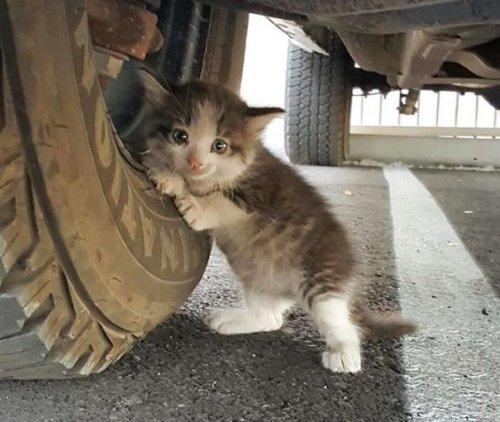 Парень увидел под машиной котёнка и не смог пройти мимо (5 фото)