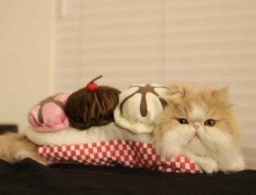 Очаровательные аппетитные котейки (10 фото)