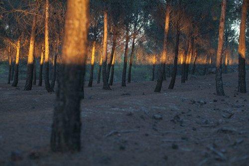 Интересные совпадения в фотопроекте Дэниса Черим (31 фото)