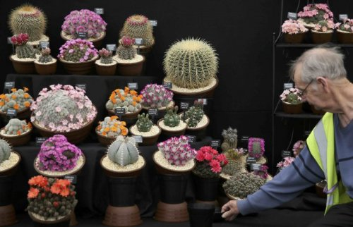 Цветочная выставка Chelsea Flower Show-2016 в Лондоне (20 фото)