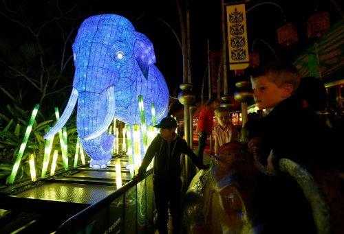 Световые скульптуры животных в зоопарке Таронга в Сиднее (9 фото)