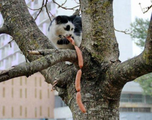 Кошки с криминальным талантом (17 фото)