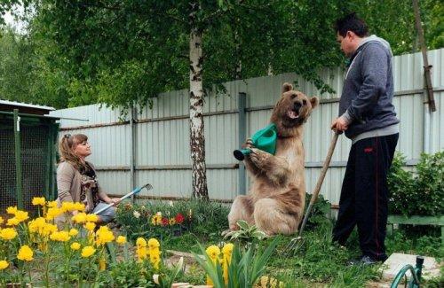 Домашний медведь семьи Пантелеенко (9 фото + видео)