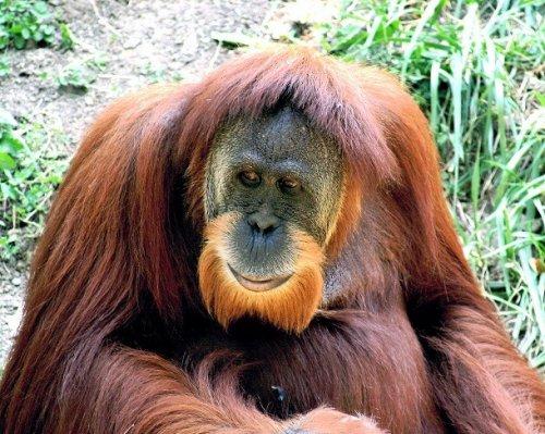 Топ-25: Животные, бородам которых могут позавидовать самые модные хипстеры