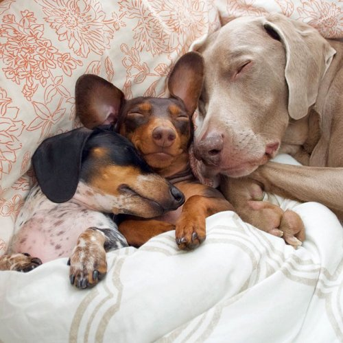 Неразлучные друзья Харлоу, Индиана и Риз (13 фото)