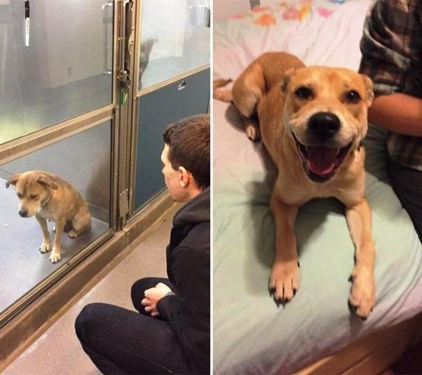 Топ-25: Трогательные фотографии собак, сделанные до и после того, как они обрели свой дом