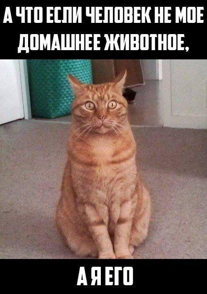 http://www.bugaga.ru/uploads/posts/2016-06/1465999329_fotomemy-10.jpg