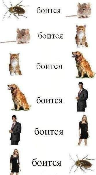 http://www.bugaga.ru/uploads/posts/2016-06/1467218296_prikolnye-memy-5.jpg