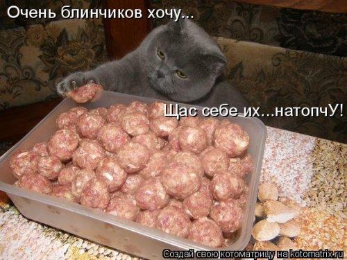 Новая котоматрица, большая коллекция (43 фото)