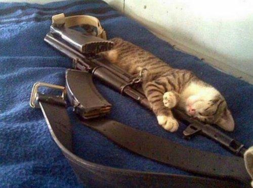 Кошки, готовые к завоеванию мира (10 фото)