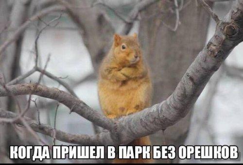 http://www.bugaga.ru/uploads/posts/2016-06/thumbs/1465376097_fotomemy-10.jpg
