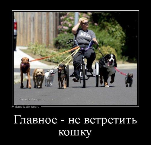 http://www.bugaga.ru/uploads/posts/2016-06/thumbs/1465453558_novye-demotivatory-11.jpg