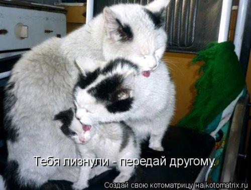 Новая котоматрица для всех (30 фото)