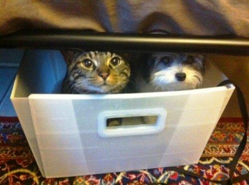 Домашние животные, которые поднимают настроение (24 фото)