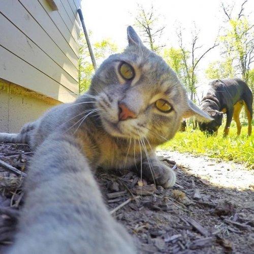 Новые селфи кота Мэнни (9 фото)