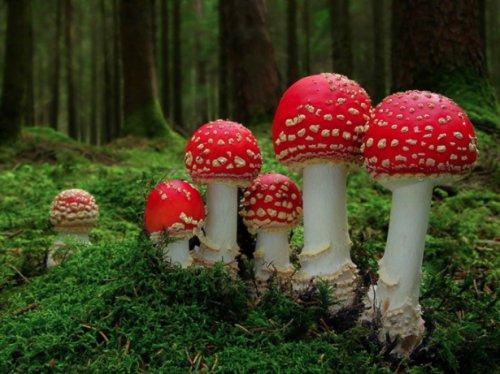 Волшебный мир грибов (26 фото)