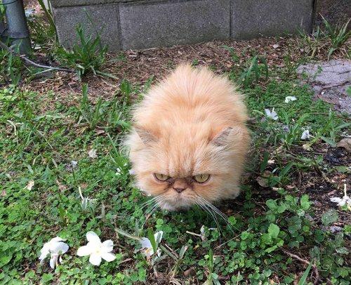 Кот Гарфильд, который всем недоволен (7 фото)