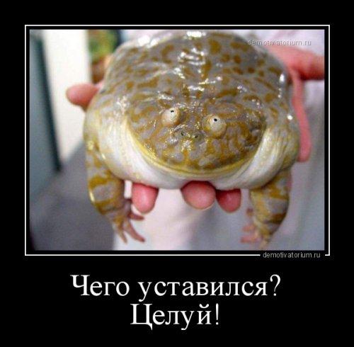 http://www.bugaga.ru/uploads/posts/2016-06/thumbs/1466753066_demotivatory-3.jpg