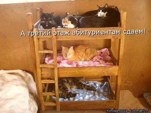 Новая котоматрица на Бугаге (33 фото)