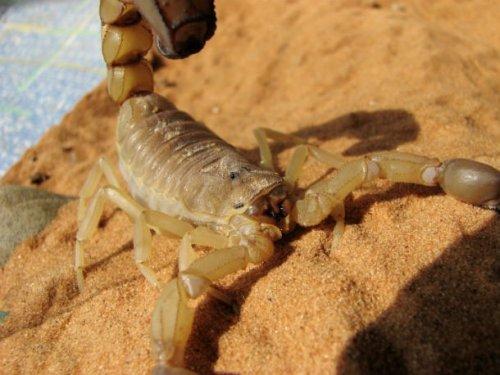 Топ-25: Самые разрушительные маленькие существа на планете