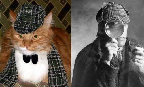 Коты-детективы, которые выведут всех на чистую воду (10 фото)