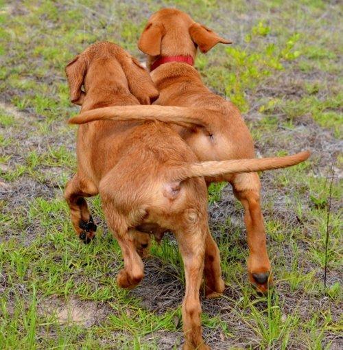 Фотографии конкурса Kennel Club Dog Photographer (14 фото)