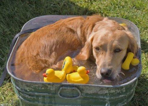Отличные способы охладить свою собаку в летний зной (10 фото)