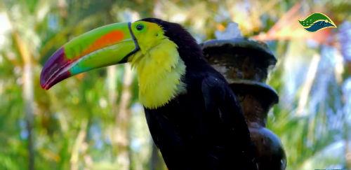 7 птиц с самыми необычными и большими клювами