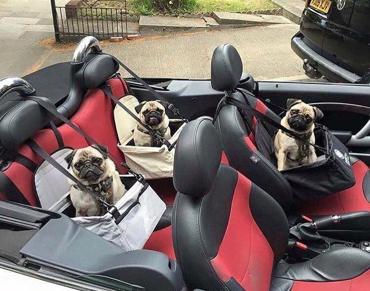 Смешные картинки про поездки на машине барби