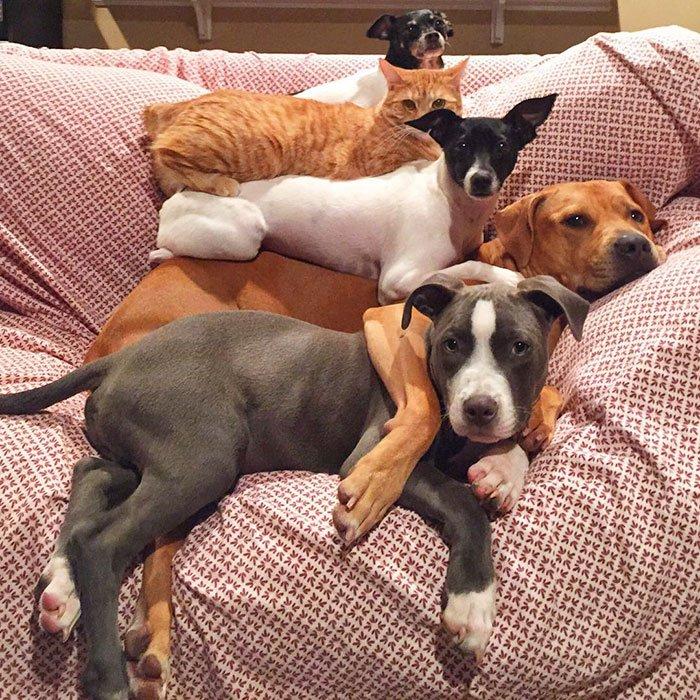 Картинки смешные домашние животные