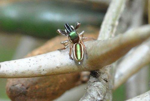 Топ-10: Уникальные представители паукообразных