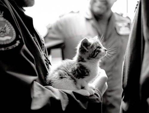 Приключения котёнка Тигра (5 фото)